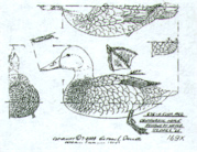 Canvasback Pattern